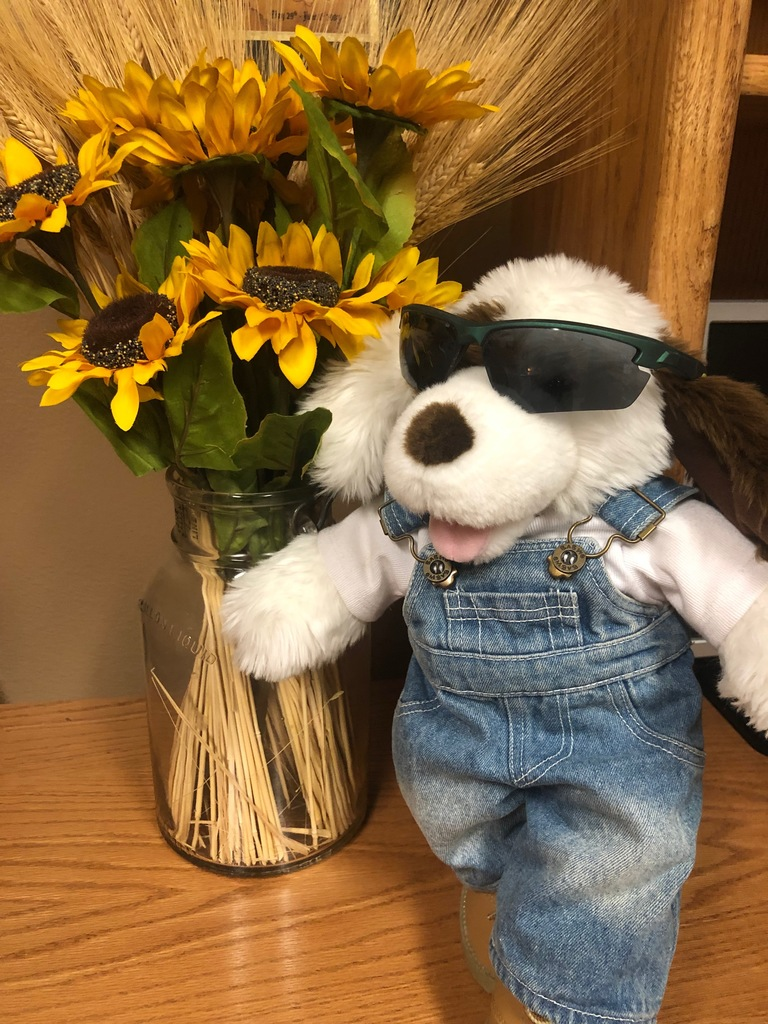 Stuffed animal in front of sunflowers